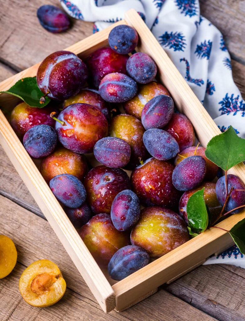 Plum fruit is gift of nature