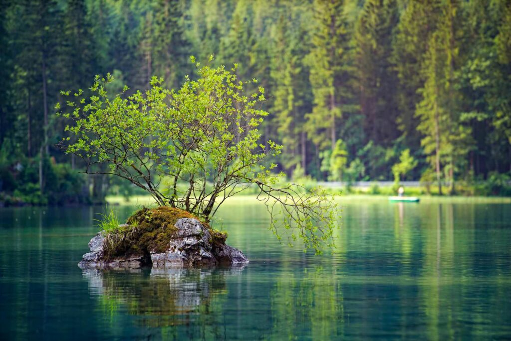 Nature lake with a tree
